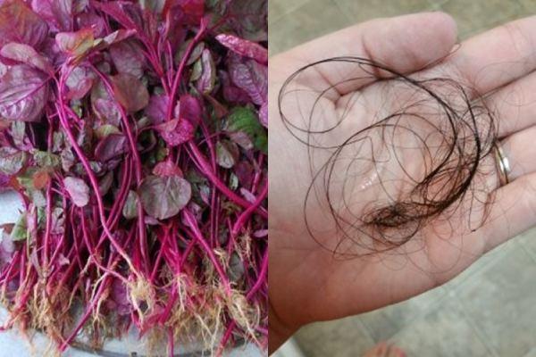 Cách trị rụng tóc hiệu quả bằng dưỡng chất tự nhiên vô cùng rẻ tiền