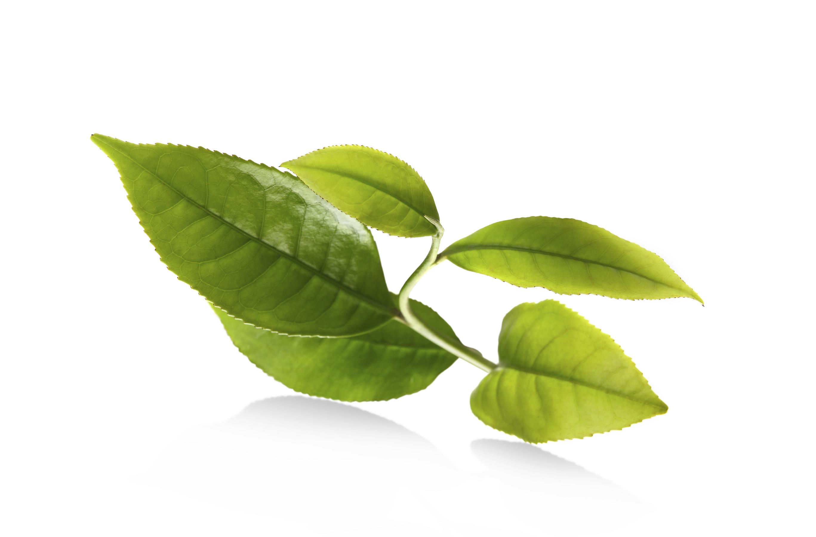 Cách trị nám hiệu quả nhất từ rau lá tự nhiên