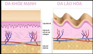 Tìm hiểu về Collagen là gì ?